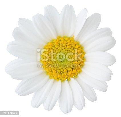Daisy (Margerite) isolated on white background, Germany
