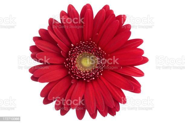 Daisy isolated picture id172713366?b=1&k=6&m=172713366&s=612x612&h=4i0hy3ihr9cnk0uqqncykrsenew0lawkbclvopzppqw=