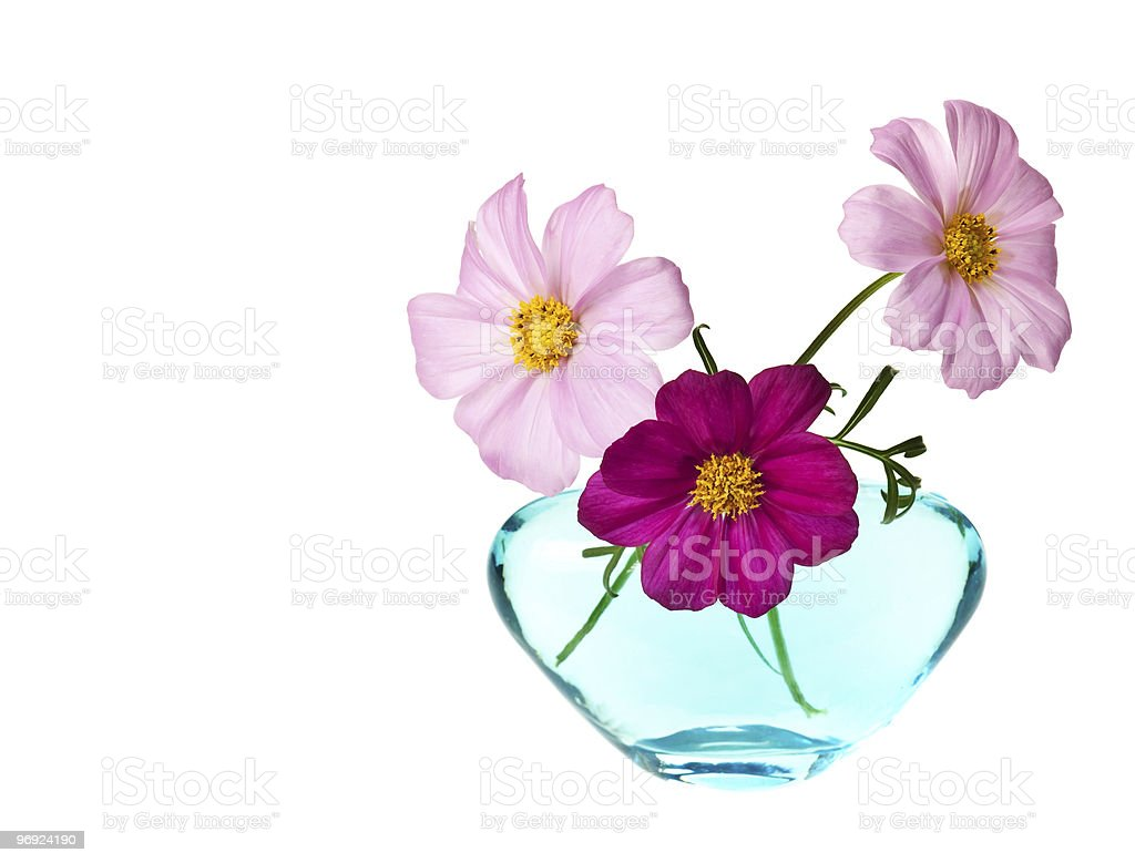 daisy isolated royalty-free stock photo