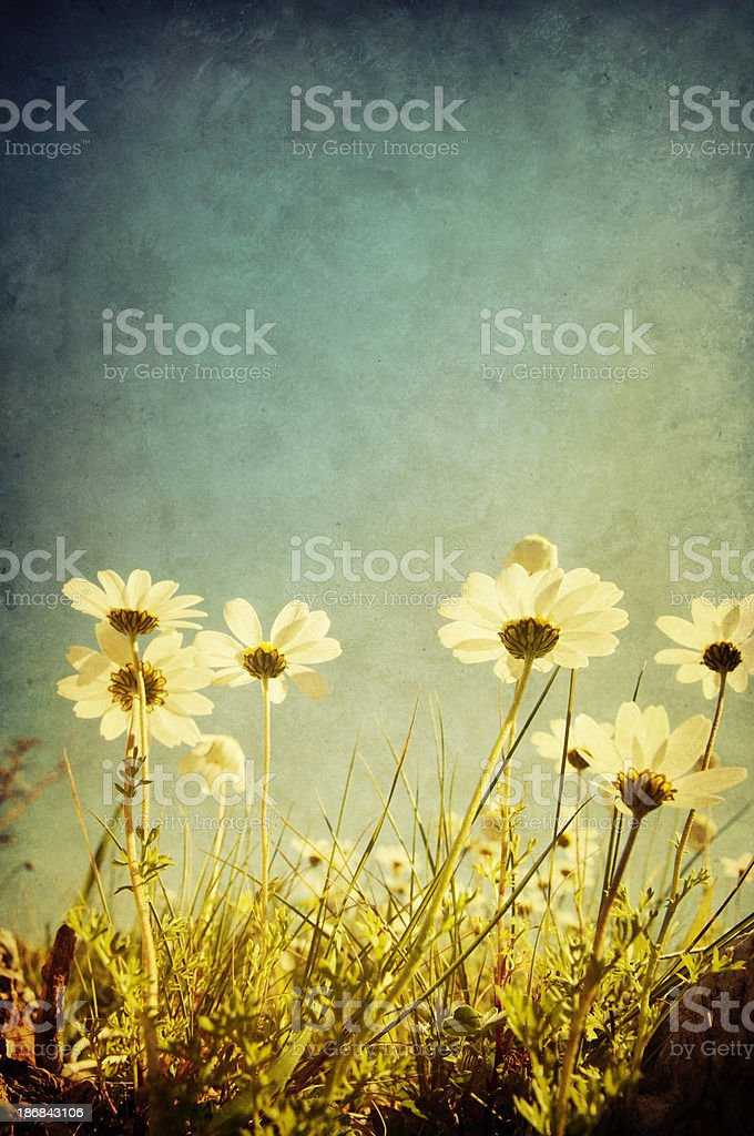 Daisy meadow, retro-style photo stock photo