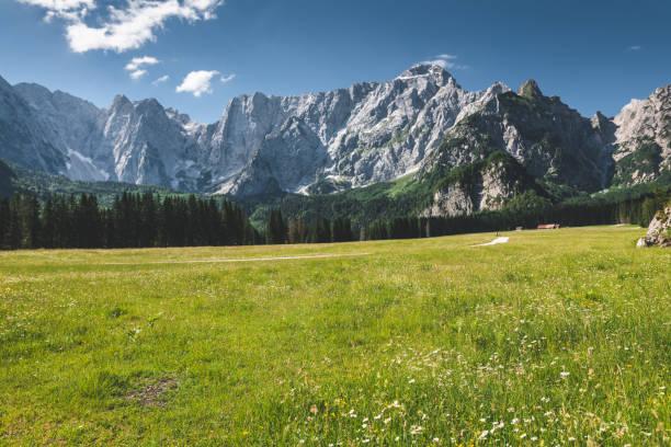 gänseblümchen auf dem berg - friaul julisch venetien stock-fotos und bilder
