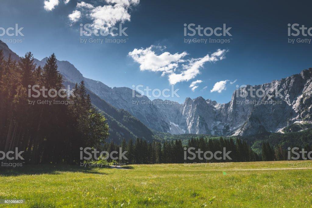 daisy on the mountain stock photo