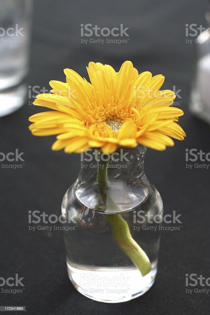 Daisy royalty-free stock photo