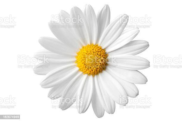 Daisy. Photo with clipping path. Similar photographs from my portfolio: