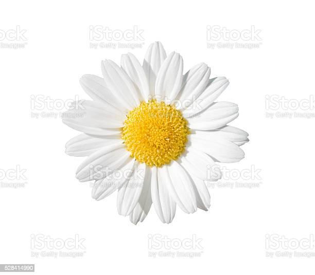 Daisy picture id528414990?b=1&k=6&m=528414990&s=612x612&h=2e5l1tojc1ejjbjoqwbycmvxlhznrvj8dtgac2aexyi=