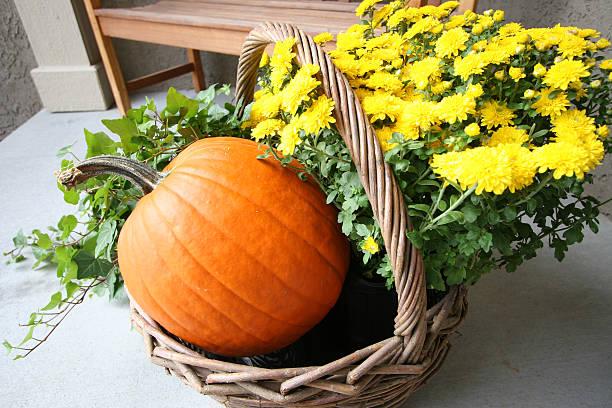 Daisy pumpkin basket stock photo