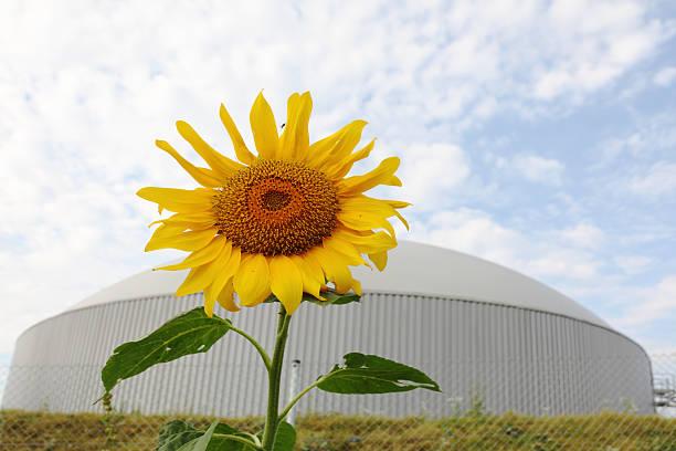 Gänseblümchen-Blume mit Hintergrund bio gas power generator – Foto
