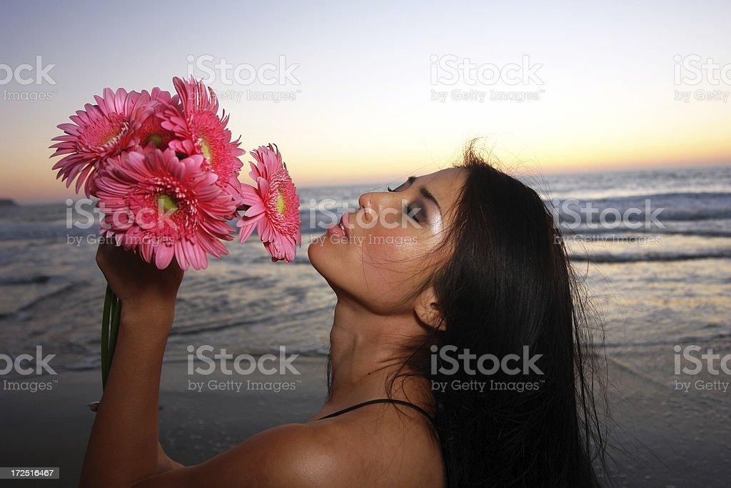 Daisy Sunset royalty-free stock photo