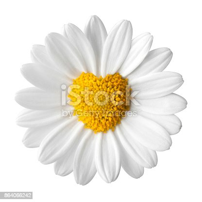 Daisy with disc flowers in heart shape.