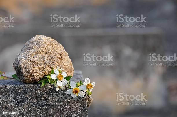 Daisy with stone picture id172684826?b=1&k=6&m=172684826&s=612x612&h=5oxtcswrenvcu9zxaeob6o1qypyhmknkgnzh7ijzyuw=