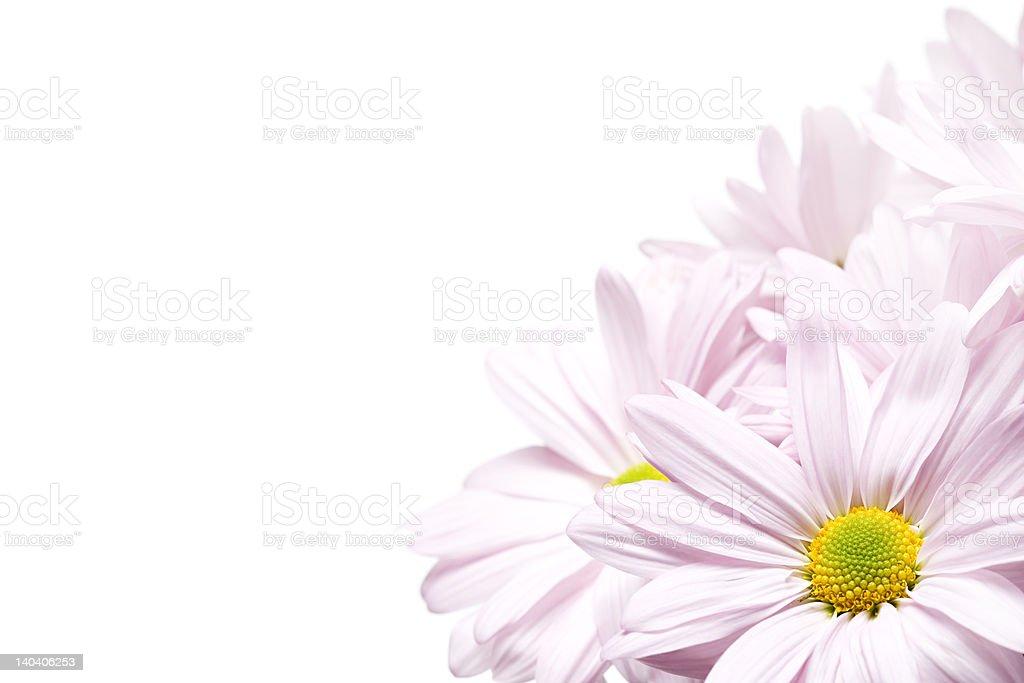 daisy's corner royalty-free stock photo