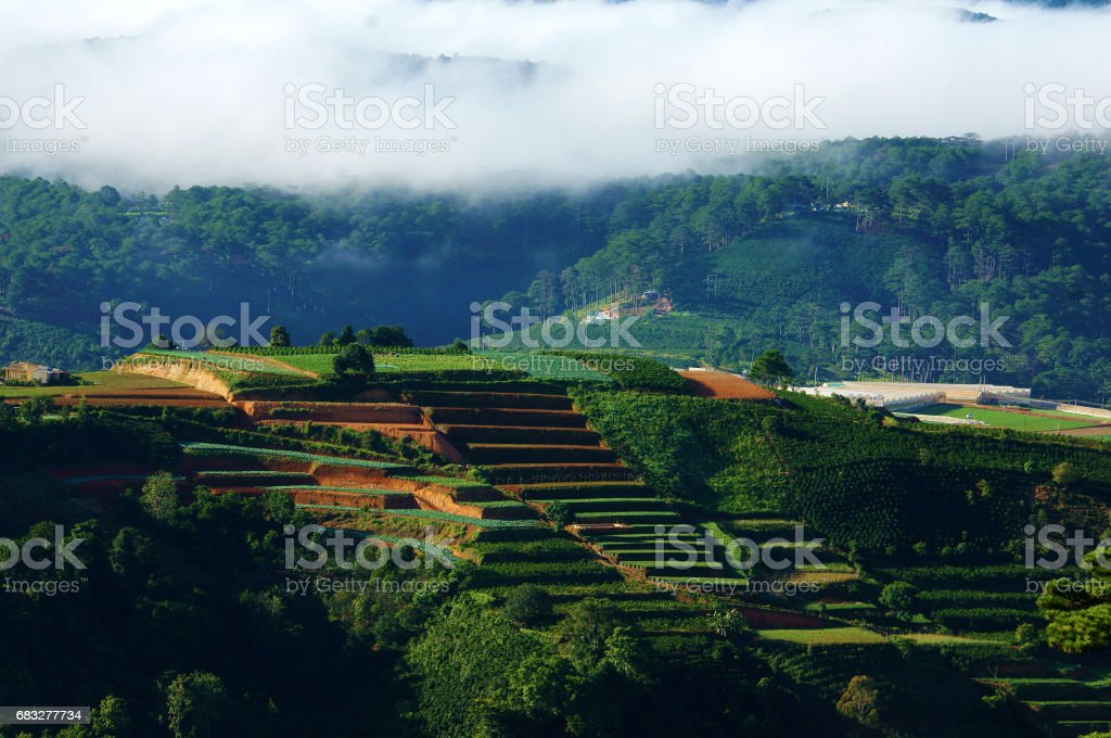 Dalat terraces, green vegetables farm stock photo