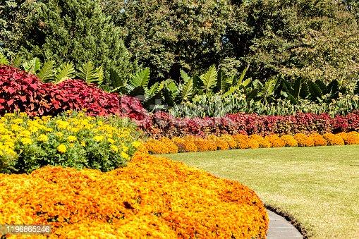 istock Dallas botanical garden 1196865246