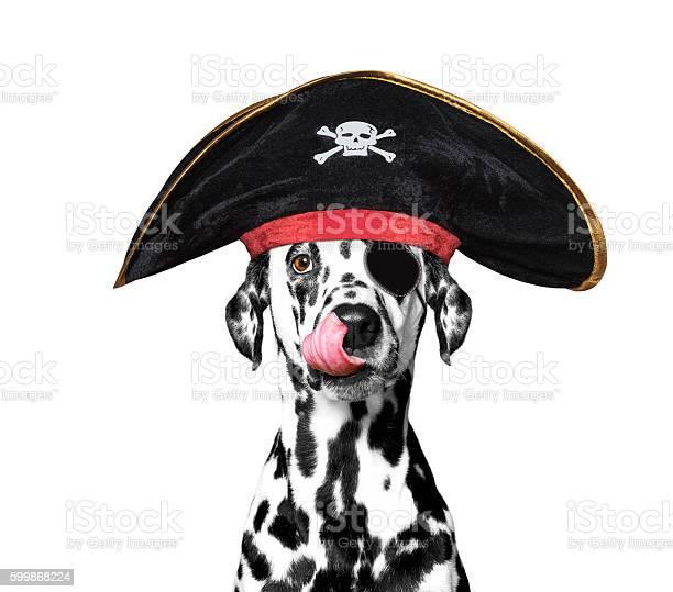 Dalmatian dog in a pirate costume picture id599868224?b=1&k=6&m=599868224&s=612x612&h=pg5bxza odaozmvtvdiwqh26hrfa0e kc6zvwaeb2we=
