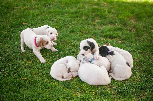 Dalmatian puppies to outdoors Dalmatian puppies enjoying newborn animal stock pictures, royalty-free photos & images