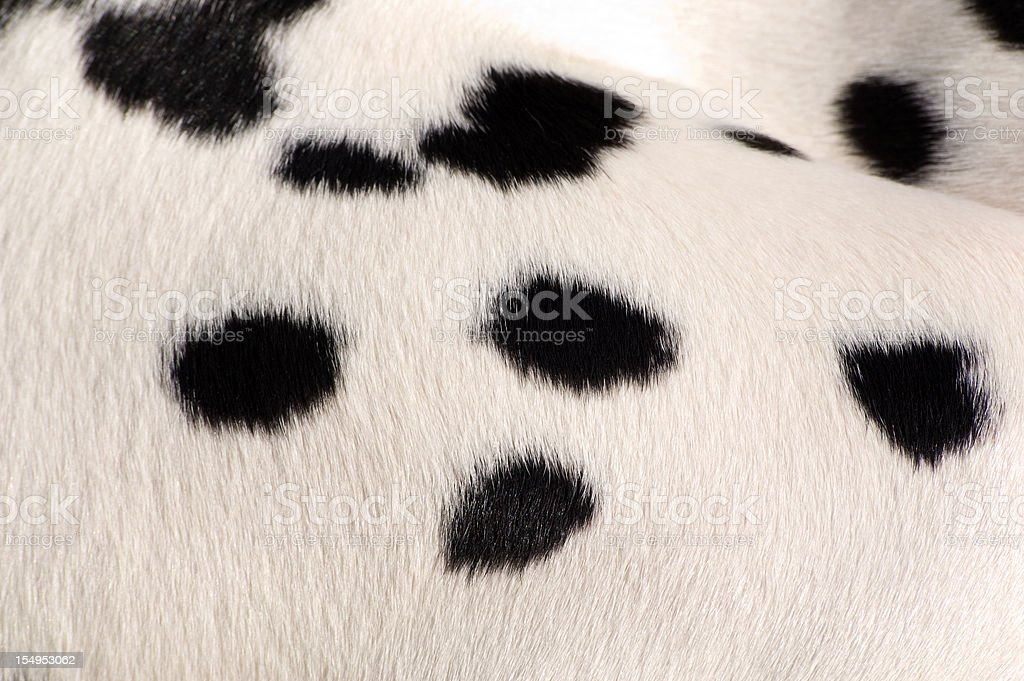 Dalmatian spotted coat background royalty-free stock photo