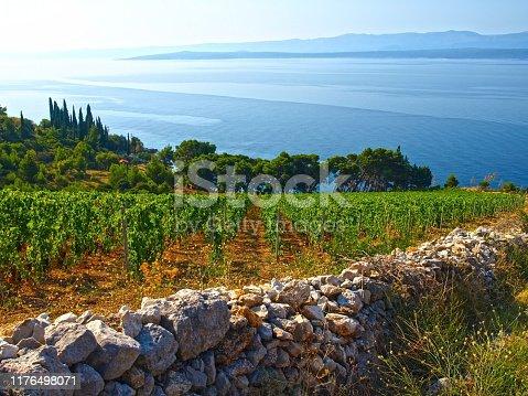 Beautiful Dalmatian vineyard, Brac island location, Croatia.