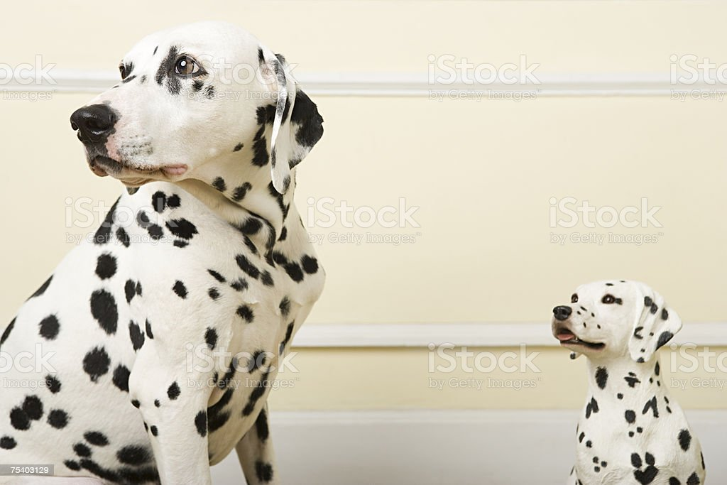 Dalmation and dog ornament stock photo