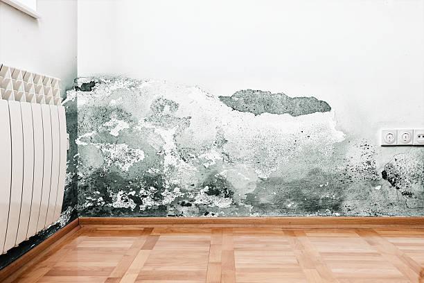 schäden durch feuchten an einer wand in einem modernen haus - farbe gegen schimmel stock-fotos und bilder