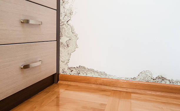 damage caused by damp on a wall in modern house - damaged stock photos and pictures