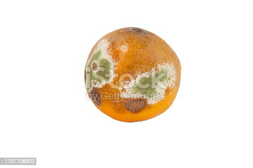 Damage to the orange by mold spores, rotten and diseased fruit