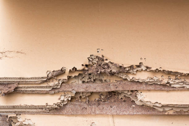 damaged brown paper by  white ants of termites. damaged brown paper by  white ants of termites. termite stock pictures, royalty-free photos & images