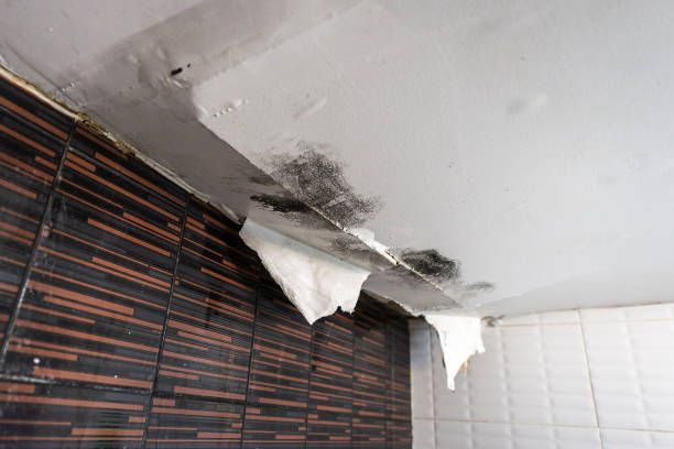 damaged ceiling from water leak - damaged stock photos and pictures