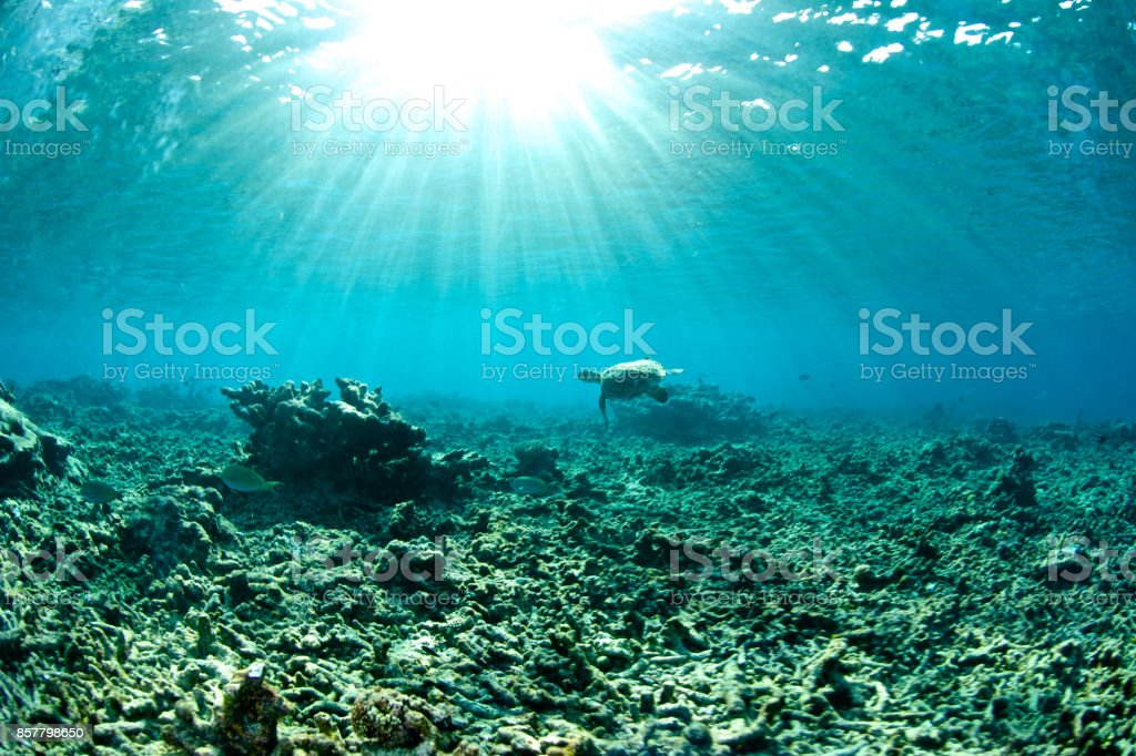 damaged coral reef stock photo