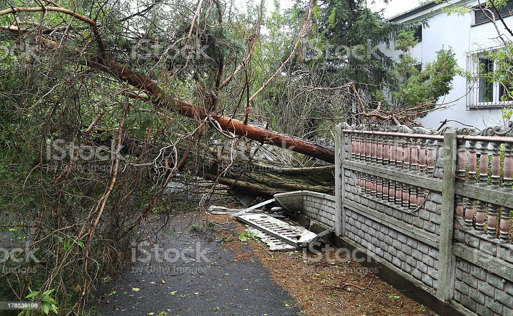 Damaged fallen tree on a rural road stock photo