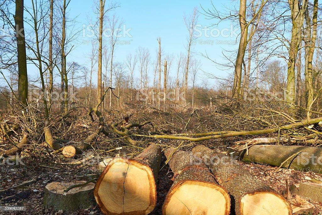 damaged Forest stock photo