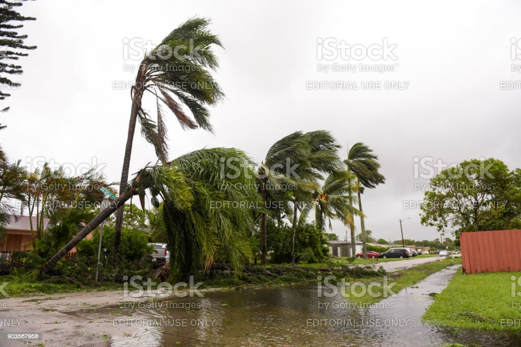 beschädigte Palmen – Foto