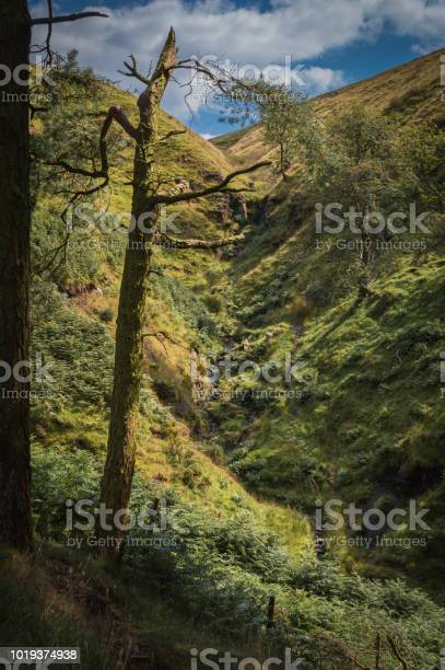 Photo of A damaged pine tree frames a small waterfall trickling down the side of a hill in the Peak District National park.