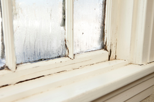 Damaged Rotting Window Inside Older Home Stockfoto en meer beelden van Aspergillus