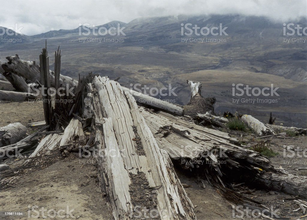 Damaged Trees at Mt. St. Helens royalty-free stock photo