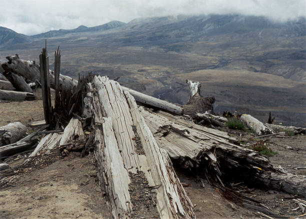 Damaged Trees at Mt. St. Helens stock photo