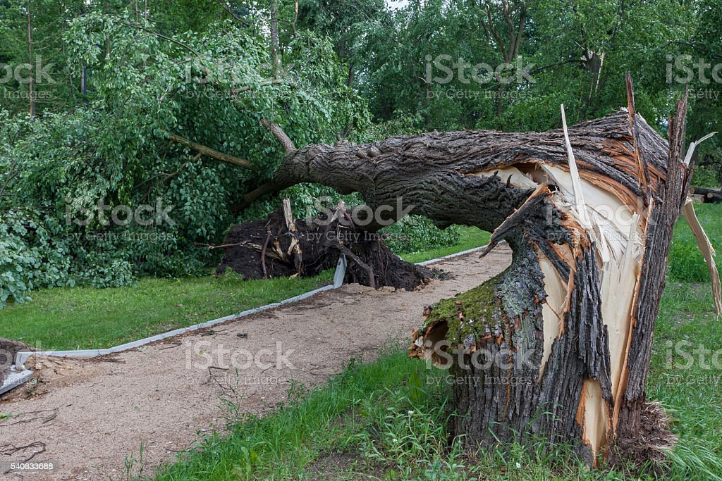 Damages after the storm and a hurricane Destroyed square after the storm and a hurricane Branch - Plant Part Stock Photo