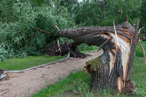 Damages After The Storm And A Hurricane Stock Photo - Download Image Now