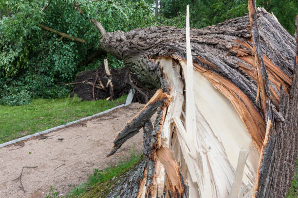 Damages after the storm and a hurricane Destroyed square after the storm and a hurricane fallen tree stock pictures, royalty-free photos & images