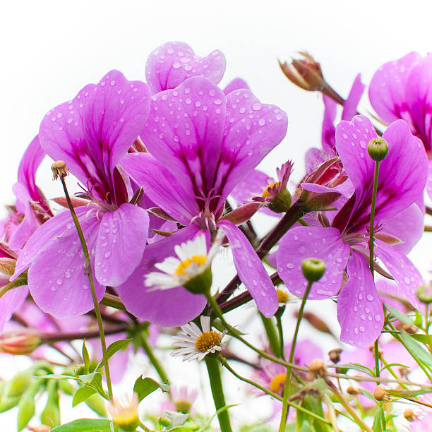 Damp Summer Flowers stock photo