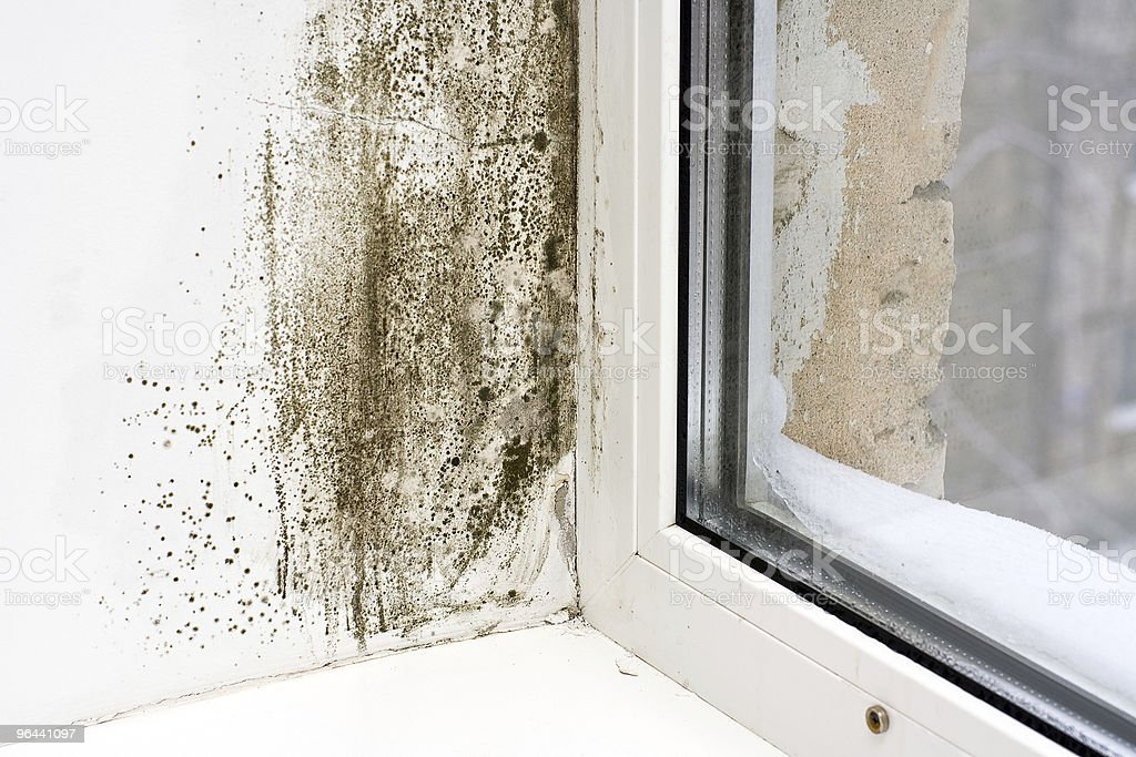 Dampness stock photo