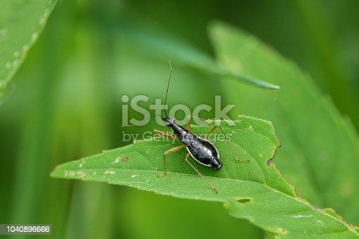 istock Damsel Bug on Leaf 1040896666
