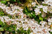 Damselfly on summer blossom