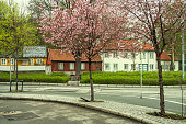 Norway - Oslo - Warm spring day among beautiful wooden houses with blossom trees on Damstredet street, the famous art and bohemian district