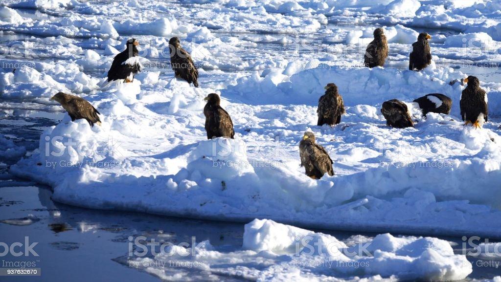 Dance in the drift ice of Shiretoko stock photo