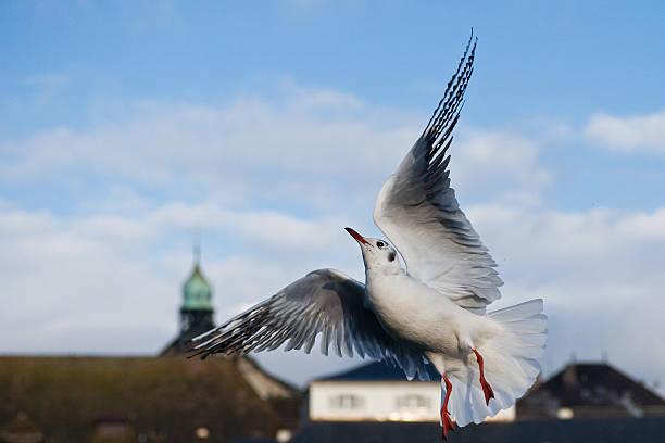 Dancing bird in the city stock photo
