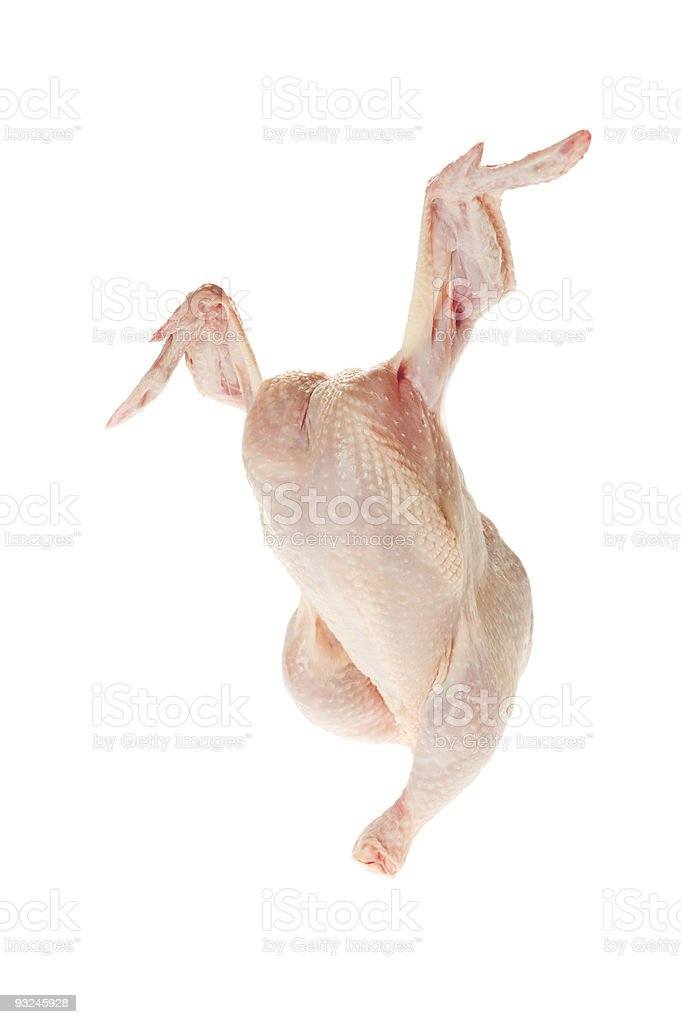dancing chicken stock photo more pictures of animal leg istock