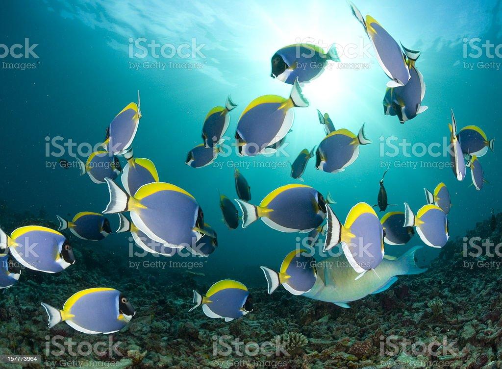 dancing fish royalty-free stock photo