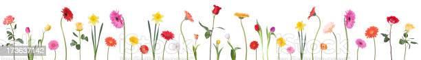 Dancing flower border picture id173637142?b=1&k=6&m=173637142&s=612x612&h=w6yryauo9prdpr348fyi0qj2ehkb9tmsitesypzhdxk=