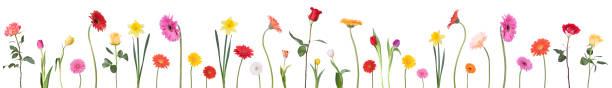 Dancing flower border picture id173637142?b=1&k=6&m=173637142&s=612x612&w=0&h= trjaoeqhhb0b3smhylldv70axbobzpc0u0xvdvpmok=