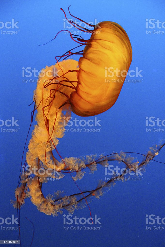 Dancing Jelly royalty-free stock photo